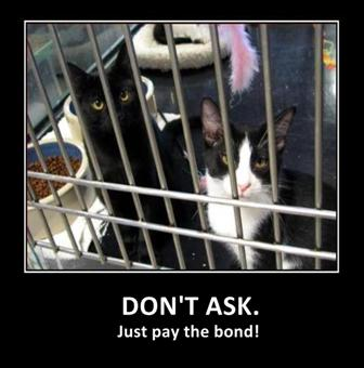 cats_in_jail_2